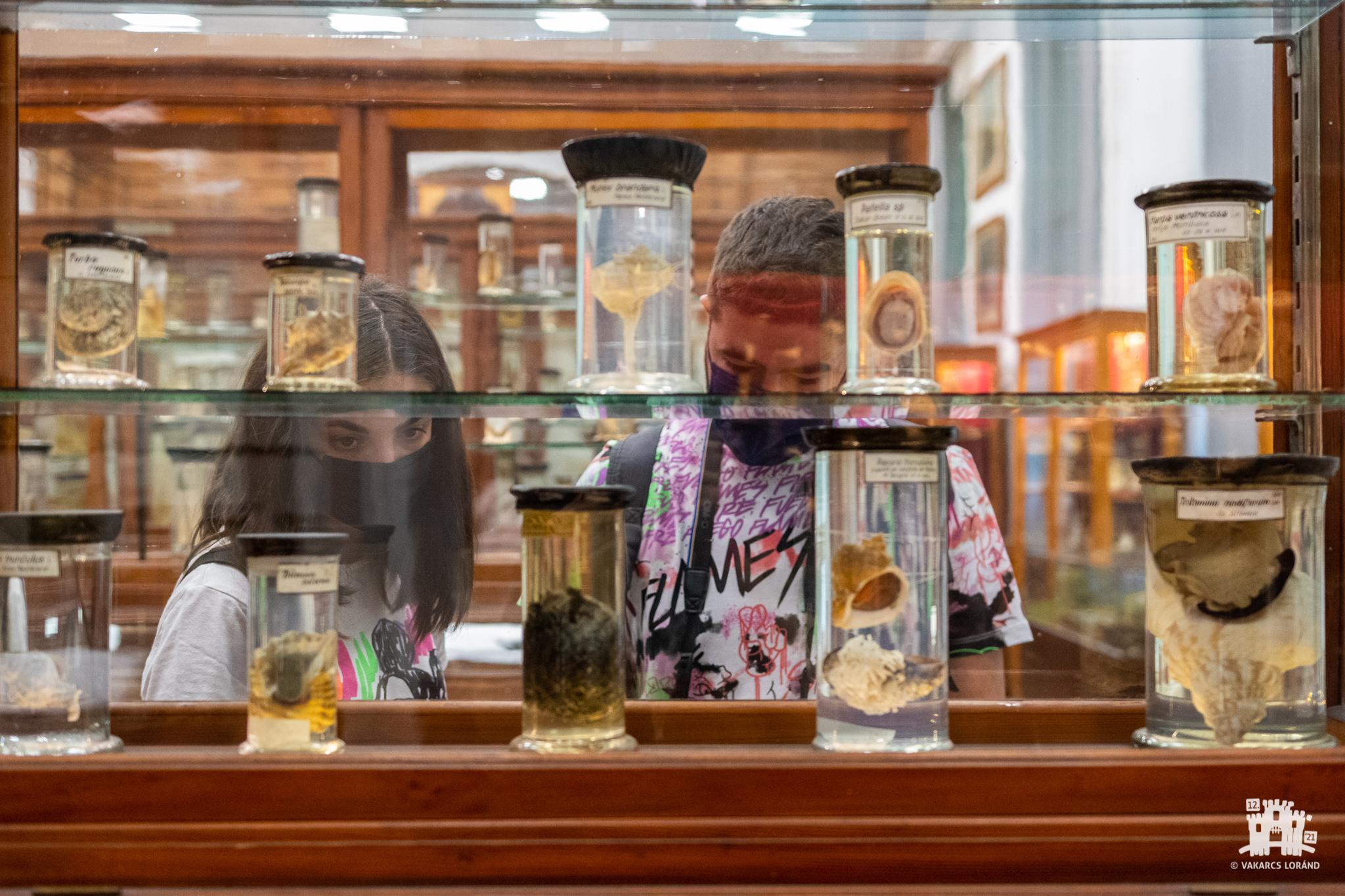 Tárlatvezetés a BBTE Állattani Múzeumában